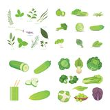 Green vegetables and herbes. Vegeterian Fresh food vector cartoon illustrations. Royalty Free Stock Images