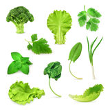 Green vegetables and herbs set Stock Photos