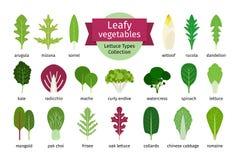Green vegetables leaf set Royalty Free Stock Photo