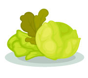 Green vegetables salad and cabbage. Stock Photography