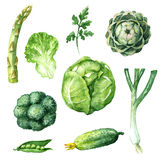 Green Vegetables Set Stock Photography