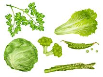 Green vegetables set Royalty Free Stock Photography