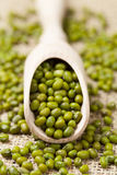 Green vegetarian nutrition raw mung beans in Royalty Free Stock Image