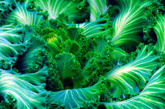 Green Vegetation. Close-up of bright bluish green vegetation Stock Photos