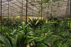 Green vegetation in a botanical garden. In Lisbon stock photo