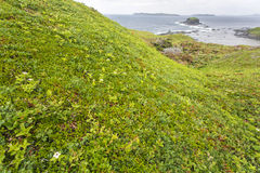 Green vegetation, Cape Onion Stock Images