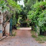 Green vegetation on a city street, shady lane. Cambodia, Siem Reap 12/08/2018 green vegetation on a city street, shady lane stock photo