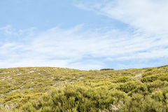 Green vegetation and cloudy blue sky landscape Royalty Free Stock Images