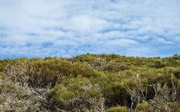 Green vegetation and cloudy blue sky landscape Stock Image