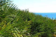 Green vegetation in the coastline of Alicante.  Stock Photos
