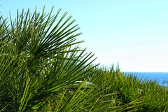 Green vegetation in the coastline of Alicante.  Royalty Free Stock Photo