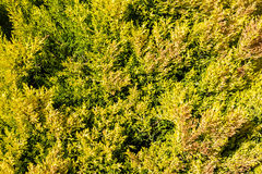 Green vegetation cover. Background of green vegetation cover and yellow Royalty Free Stock Photography
