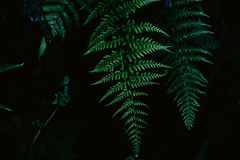 Green, Vegetation, Ferns And Horsetails, Plant Royalty Free Stock Image