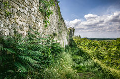 Green vegetation forest around a stone wall Royalty Free Stock Photo
