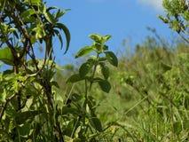 Green vegetation. Generic green vegetation Stock Photos