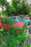 Green vegetation is growing over an abandoned car Stock Image