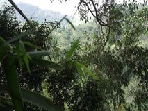 Green vegetation in the jungle. Bamboo tropics. stock video