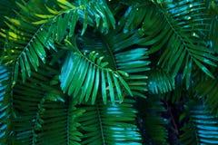 Green, Vegetation, Leaf, Tree Royalty Free Stock Images
