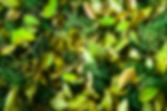 Green vegetation leaves smudge blurry background Royalty Free Stock Photo