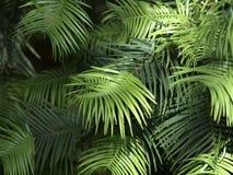 Green Vegetation stock image