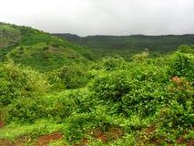 Green vegetation on mountain Stock Photography