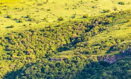 Green vegetation on the mountain slopes in spring.  royalty free stock photo