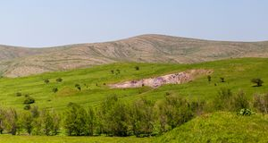 Green vegetation on the mountain slopes in spring.  royalty free stock images