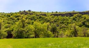 Green vegetation on the mountain slopes in spring.  stock image
