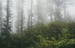 Green vegetation in mysterious foggy forest Stock Images
