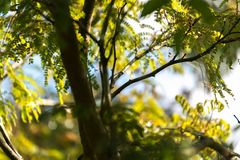 Green vegetation in nature with trees and leaves. All over royalty free stock images