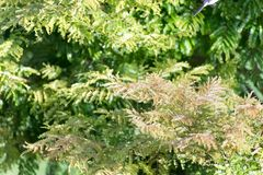 Green vegetation in nature with trees and leaves. All over royalty free stock image