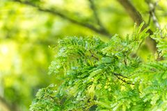 Green vegetation in nature with trees and leaves. All over stock images