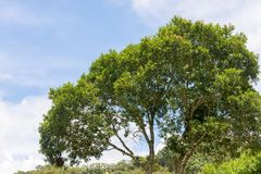 Green vegetation in nature with trees and leaves. All over royalty free stock photos