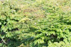 Green vegetation in nature with trees and leaves. All over royalty free stock photography