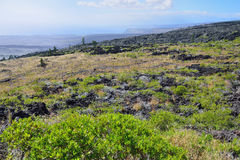 Green vegetation on an old lava flow field by the ocean in Volcanoes National Park, Big Island of Hawaii Royalty Free Stock Photography