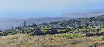 Green vegetation on an old lava flow field by the ocean in Volcanoes National Park, Big Island of Hawaii Royalty Free Stock Photo