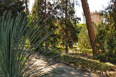 Green vegetation in the park.  Stock Photography