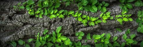 Green, Vegetation, Plant, Leaf Stock Photo