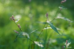Green vegetation in the rays of the sun. Green background pink flower buds. stock photos