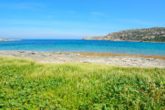 Green vegetation by the sea in Gallura Royalty Free Stock Images