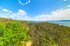 Green vegetation by the sea Royalty Free Stock Image