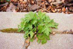 Green vegetation Stock Images