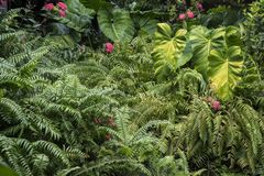 Green vegetation in the summer flowers and leaves royalty free stock photo