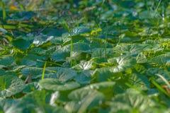Green vegetation. Summer park. Green Grass carpet in Summer park. Green vegetation. Summer park. Green vegetation in the rays of the sunset. Green vegetation stock photos