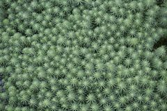 Green Vegetation Texture Background Pattern. Top view of green vegetation pattern background royalty free stock image