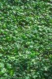 Green vegetation texture. Vegetation pothole stock photos
