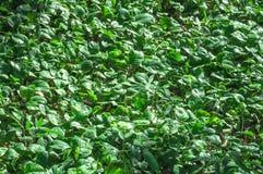 Green vegetation texture. Vegetation pothole stock images