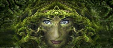 Green, Vegetation, Tree, Leaf Stock Images