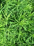 Green vegetative background Royalty Free Stock Photos