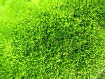 Green vegetative background Stock Images